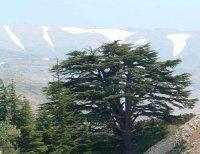 Паломничество в Ливан (май)
